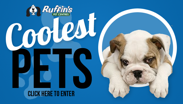 Coolest Pet Contest Silver Tee Golf Centre