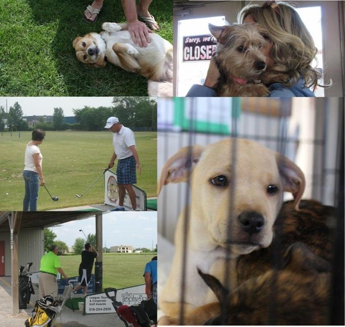 Animal Rescue Fundraiser Silver Tee